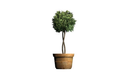 Boxwood topiary - isolated on white background Stock fotó