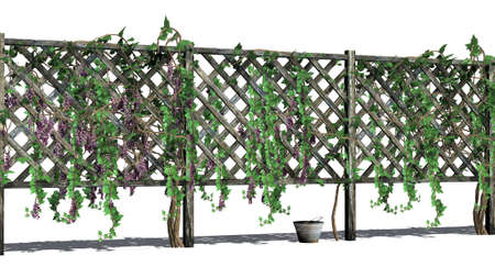 tendrils: fence with vine tendrils - isolated on white background Stock Photo