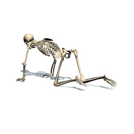 skeleton crawls - isolated on white background Stock Photo