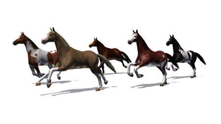 Horses - running herd - isolated on white background