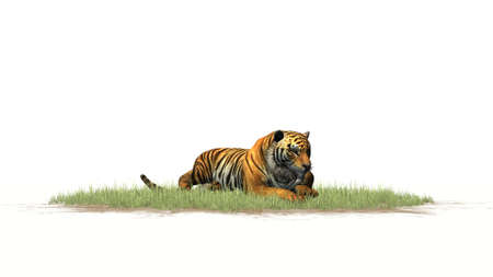 3D digital render of a Tiger on grass area in front on a white background