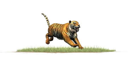 Tiger jumping on grass area - isolated on white background Stock Photo