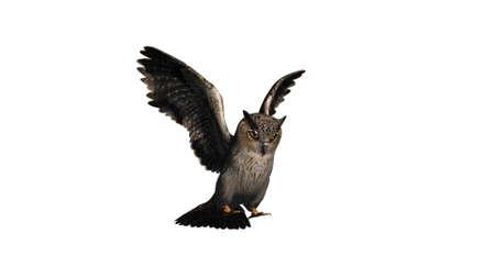 owl - isolated on white background