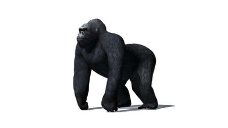 Gorilla - isolated on white background