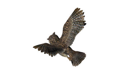 Owl - isolated on white background Stock Photo