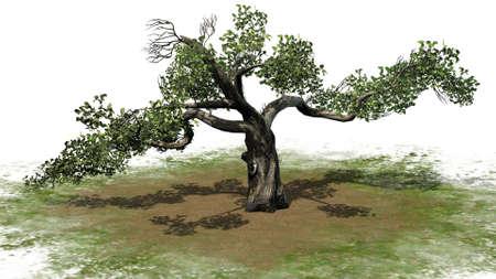 Honey Tree - isolated on white background 版權商用圖片