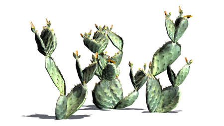 Prickly pear cactus cluster with shadow - isolated on white background 写真素材