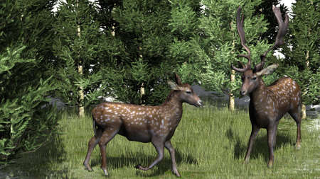 deers on green grass - isolated on nature background Stock Photo