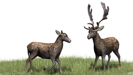 deers on green grass - isolated on white background Stock Photo