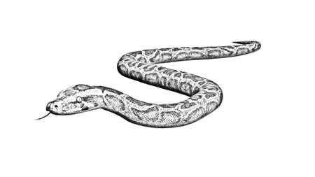 Python snake - cartoon silhouette