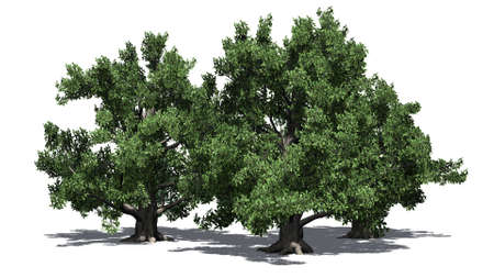 European beech tree cluster with shadow - isolated on white background Banco de Imagens
