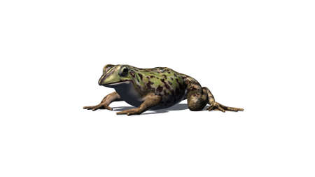 Frog seated - left sight view - isolated on white background