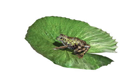 Frog on lily pad - left side view - isolated on white background