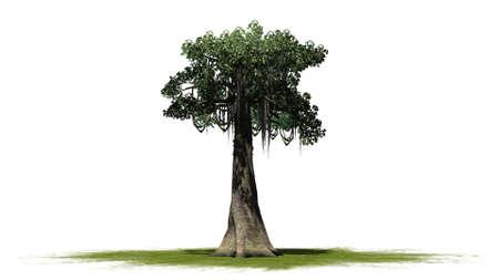 single kapok tree on a green area - isolated on white background