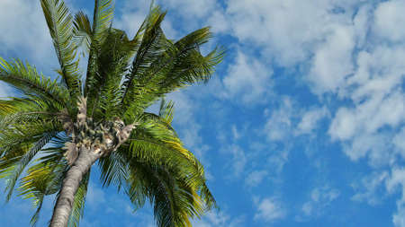 Queen palm tree aginst blue sky, Tropical Island Holiday Concept Foto de archivo - 118541226