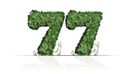 Number 77 created of green ivy leaves - isolated on a white background Stockfoto