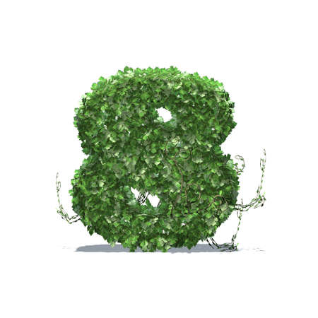 Number 8 created of green ivy leaves with shadow on the floor - isolated on a white background