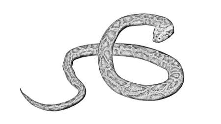 Python snake - Cartoon silhouette - isolated on white background