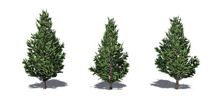 Set of Christmas Scotch Pine trees with shadow on the floor - isolated on a white background Reklamní fotografie