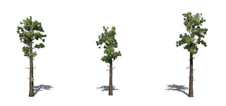 Set von Muster-Nadelbäumen mit Schatten auf dem Boden - isoliert auf weißem Hintergrund