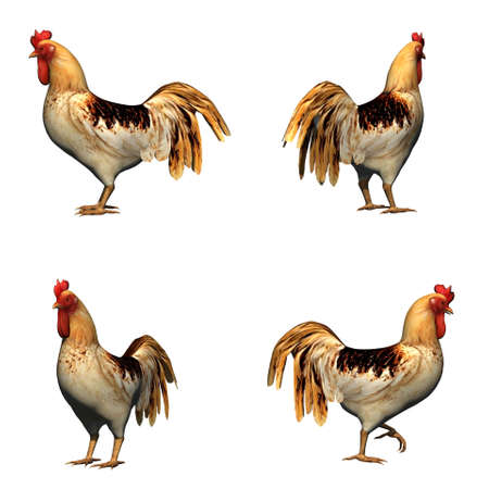 Set of rooster - isolated on white background Stock Photo