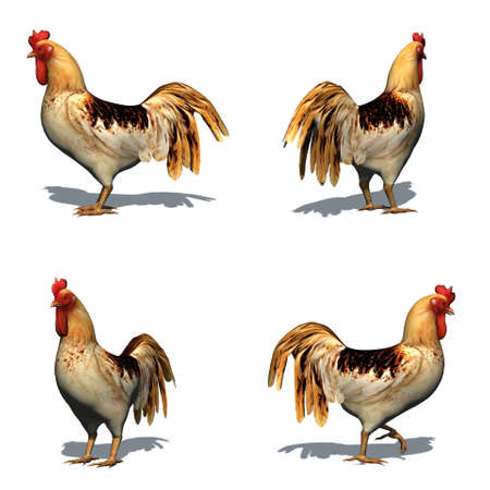 Set of rooster with shadow on the floor - isolated on white background