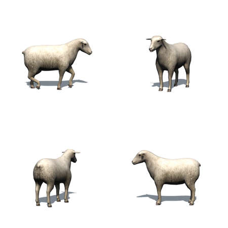 Set of sheep with shadow on the floor - isolated on white background