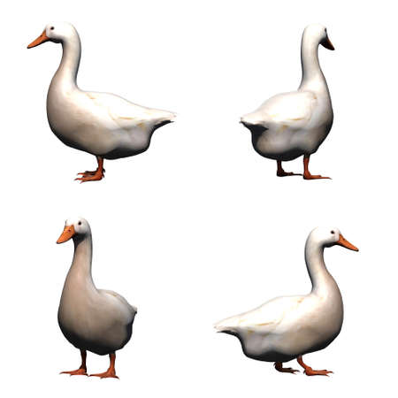 Set of white goose - isolated on white background
