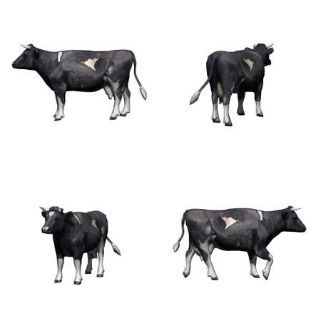 Set of black white cow - isolated on white background