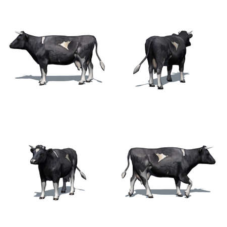 Set of black white cow with shadow on the floor - isolated on white background Stock Photo