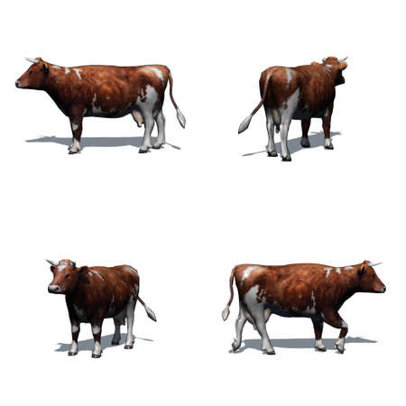 Set of brown white cow with shadow on the floor - isolated on white background