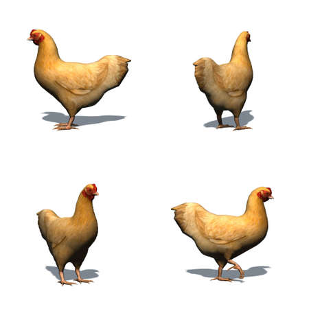 Set of brown chicken with shadow on the floor - isolated on white background