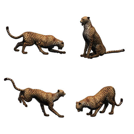 Set of cheetah in different movements - isolated on white background Stock Photo
