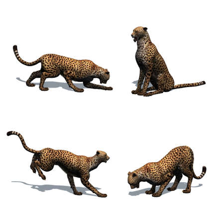 Set of cheetah in different movements with shadow on the floor - isolated on white background Banco de Imagens