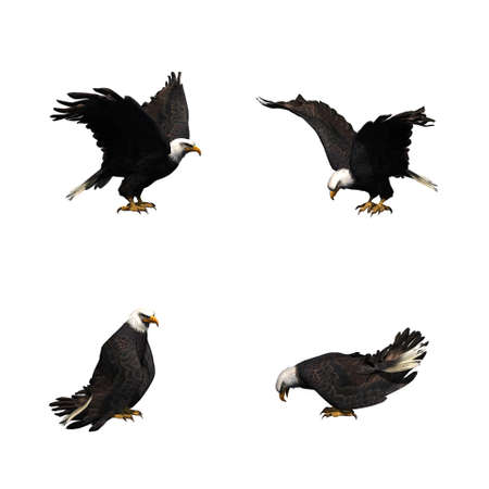 Set of eagle in different movements - isolated on white background