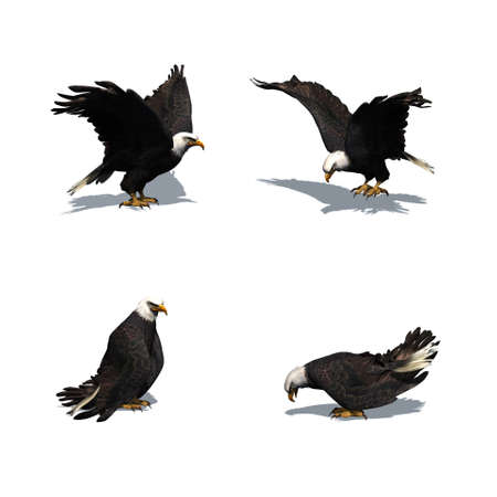 Set of eagle in different movements with shadow on the floor - isolated on white background