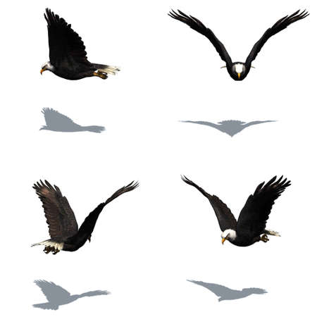 Set of eagle with shadow on the floor - isolated on white background Stock Photo