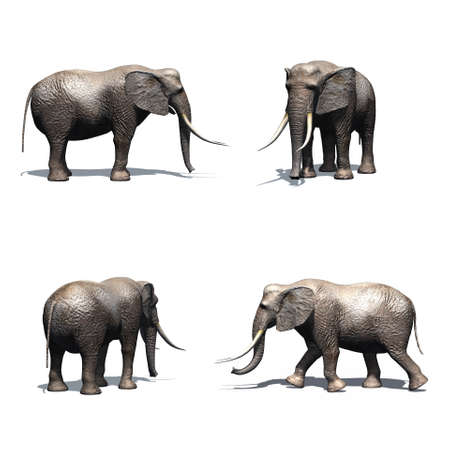 Set of elephant with shadow on the floor - isolated on white background Stock Photo