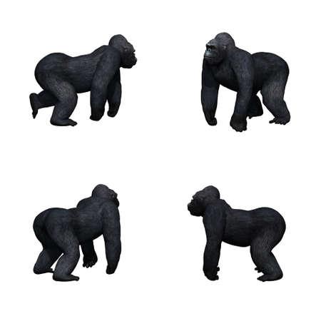 Set of gorilla - isolated on white background Stock Photo