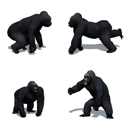 Set of gorilla in different movements with shadow on the floor - isolated on white background