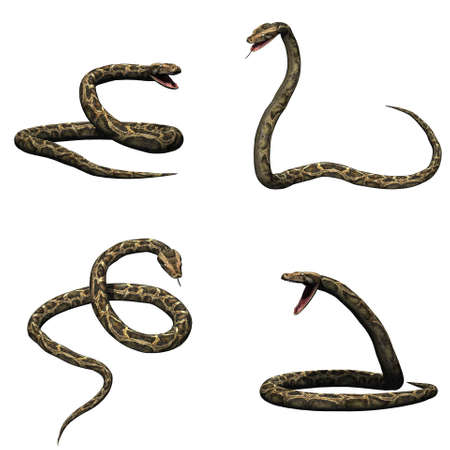 Set of python in different movements - isolated on white background Stock Photo
