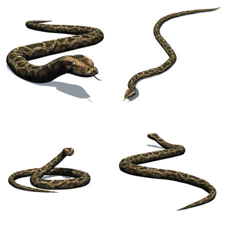Set of python with shadow on the floor - isolated on white background Stock Photo