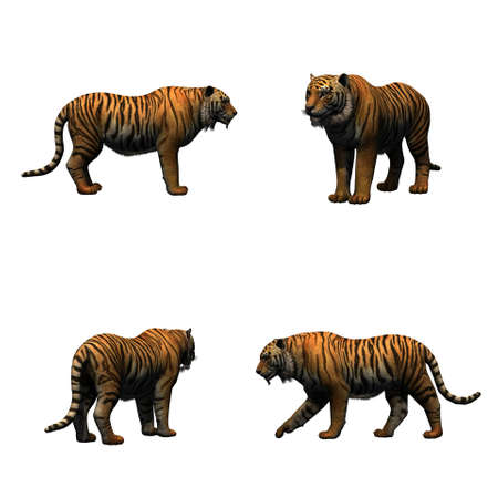 Set of tiger - isolated on white background