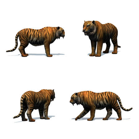 Set of tiger with shadow on the floor - isolated on white background Stock Photo