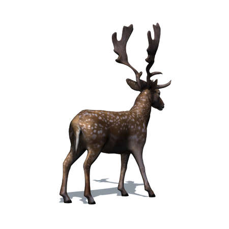 Wild animals - fallow deer in view from behind with shadow on the floor - isolated on white background - 3D illustration