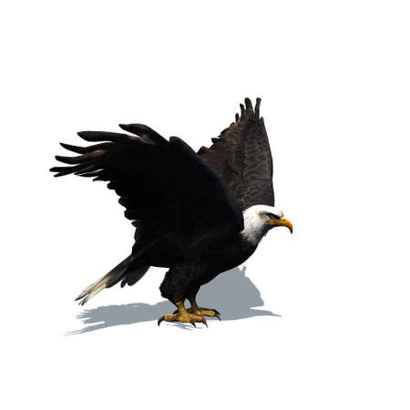 Wild animals - eagle with shadow on the floor - isolated on white background - 3D illustration