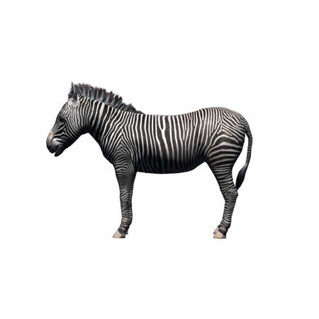 Wild animals - zebra - isolated on white background - 3D illustration