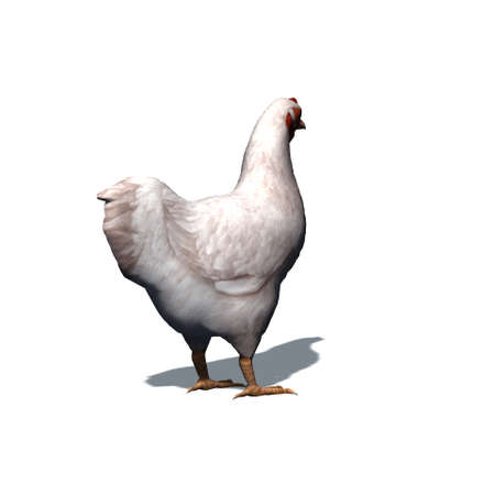 Farm animals - white chicken with shadow on the floor - isolated on white background - 3D illustration