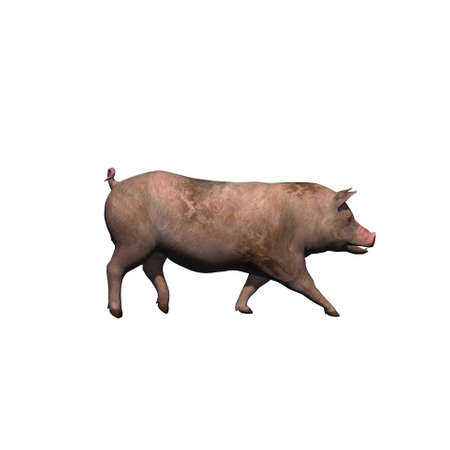 Farm animals - pig - isolated on white background - 3D illustration Stock fotó