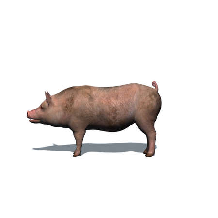 Farm animals - pig with shadow on the floor - isolated on white background - 3D illustration